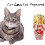 Can Cats Eat Popcorn