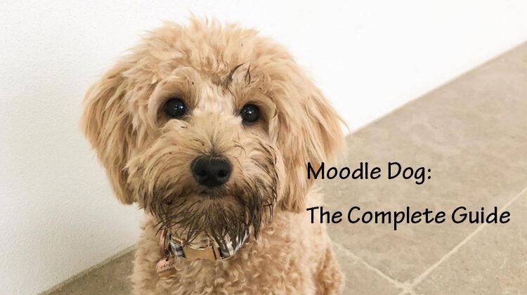 Moodle Dog