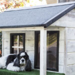 Best Outdoor Dog House
