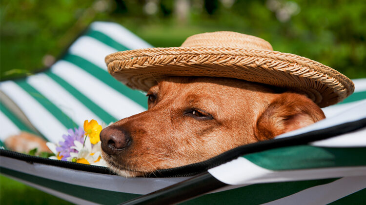 Best Travel Dog Bed