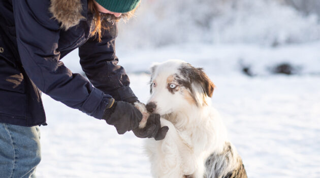 Best Dog Paw Balm
